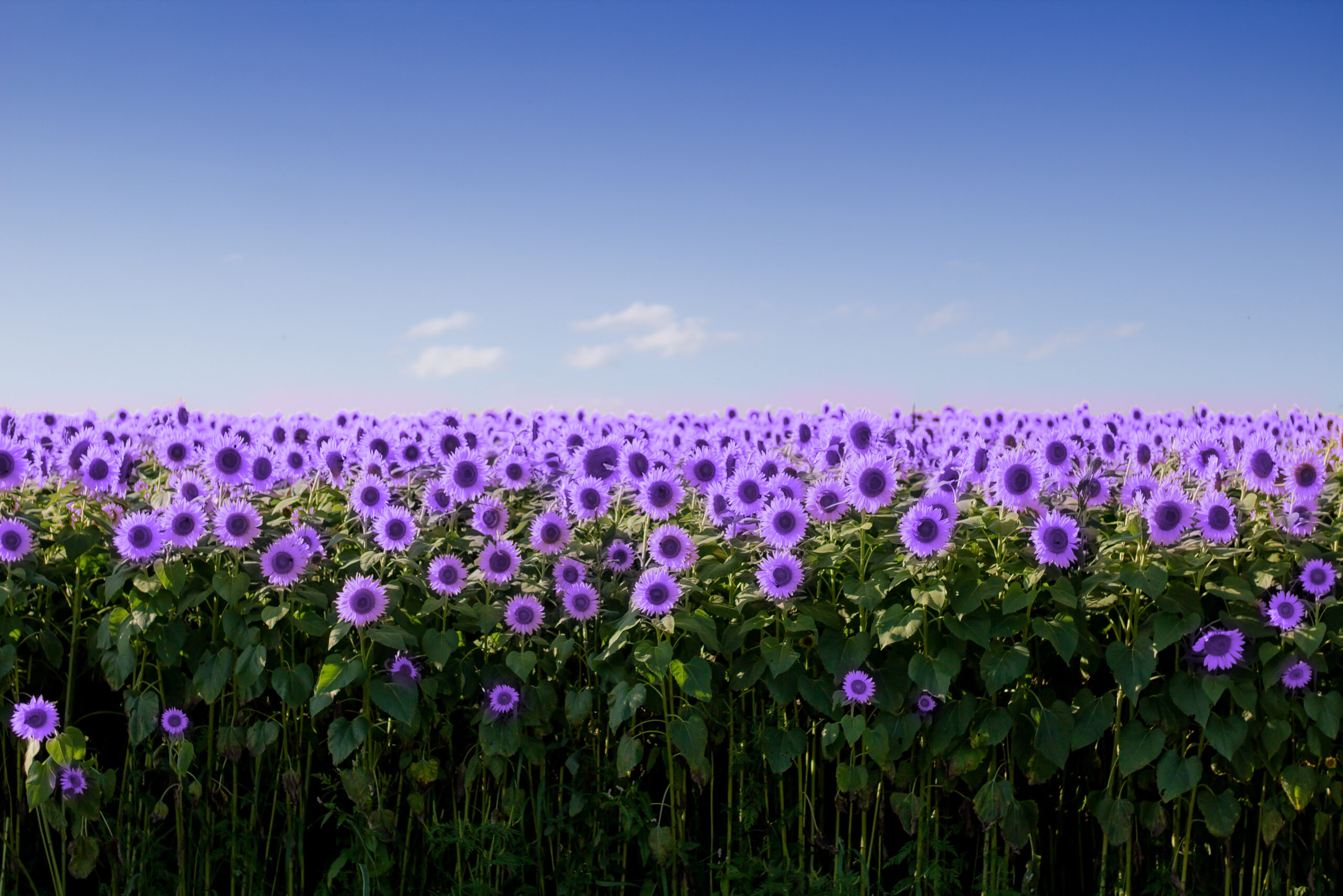 Thrive scaled - Every business deserves a chance to bloom